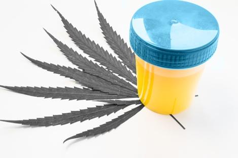 MK_marijuana-drug-testing_02.09.18.jpg